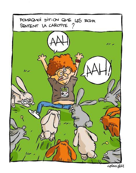 39-Les carottes 2